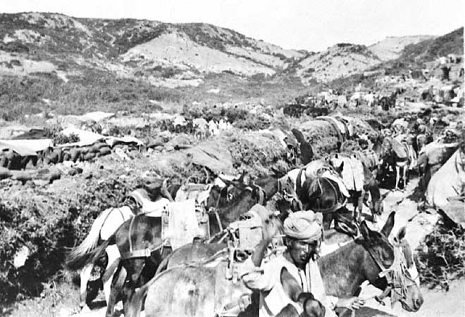 Indian Muleteers at Gallipoli. Courtesy of AWM.