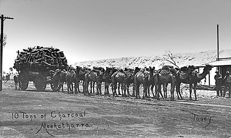 Massa Singh lived at Meekatharra, WA. This Camel Wagon photo was taken at Meekatharra.